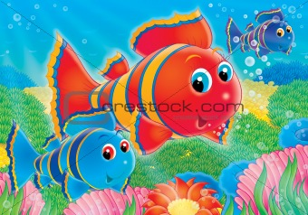 Coral fish