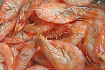 Prawns freshly steamed and cooked for shelling