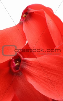 abstract red petals