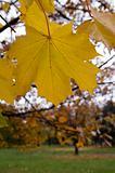 Autumn study 1