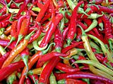 Hot chilly peppers