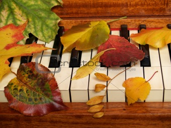 Autumn leaves sprinkled on piano keys