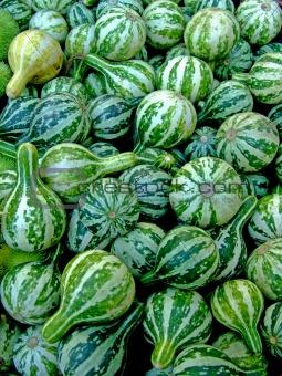 Green miniature pumpkins