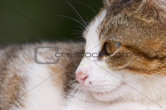 Cat profile closeup (outdoors)