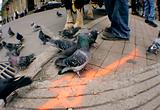 Pigeon in city