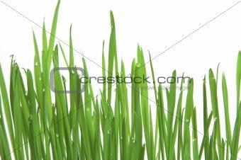 Green grass, horizontal format