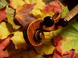 Maple to Maple-- Violin Scroll and Neck on Autumn Leaves