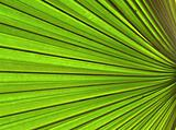 abstraction of plant