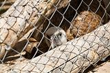 vulture confine