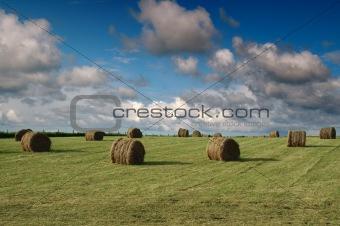 Tiree Harvest