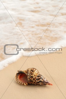 Seashell and ocean wave