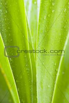 Waterdrops on green leaves