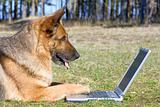 Germany Sheep-dog laying on the grass with laptop