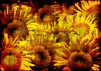 Grunge background - decorative collage from sunflowers