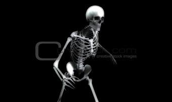 Bones 29
