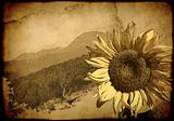 Background - retro poster with a sunflower