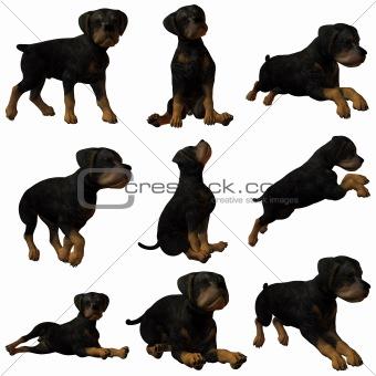 3D Puppy