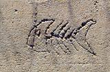 fish in beton - symbol