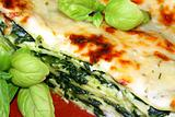 Vegetarian lasagna with ricotta cheese spinach filling and basil