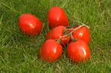 red tomato on grass background