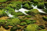 Moss,dam