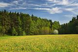 Wood,dandelions,blooming_tree