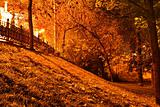 Night gold (àutumn night)