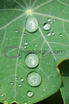 Waterdrops on green leaf