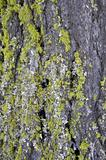 Lichens on Wood