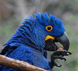 tropical blue parrot