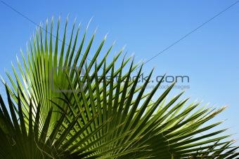Palm's pattern