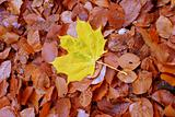 autumn individualist