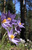Wood flowers.