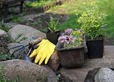 flowers and equipment in garden