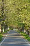 Road in a summer park