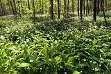 Eatable Danish Forest