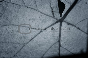 Beautiful background leaf