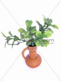 green twig in a vase