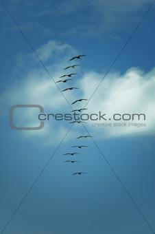 13 Birds