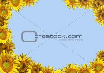 Background - decorative framework from sunflowers
