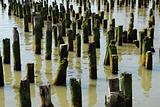 Old piling stumps off the shore in New York Harbor