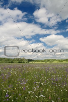 Amazing bluebell field with cloudy sky
