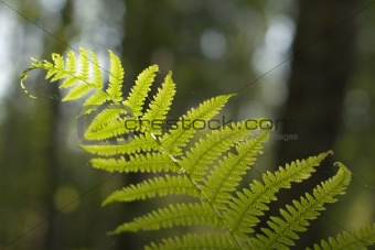 Fern in counterlight