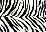Texture - a fluffy skin of a zebra