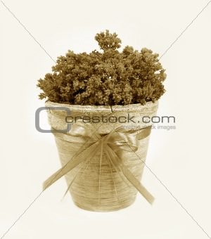 Ancient decorative flowerpot with a tape. Sepia