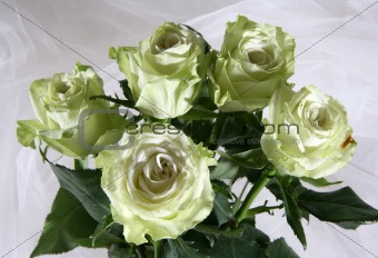Greenish roses