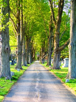 Small Road In Cemetery, Edged With Green Trees