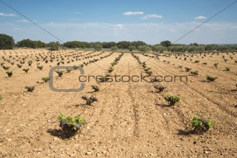 cultivation field
