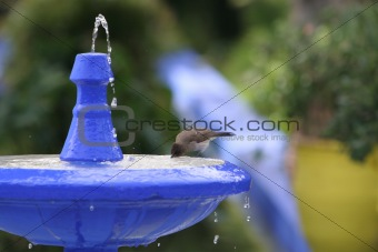 Fountain with silhouette of bird