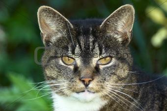 Portrait of an old cat